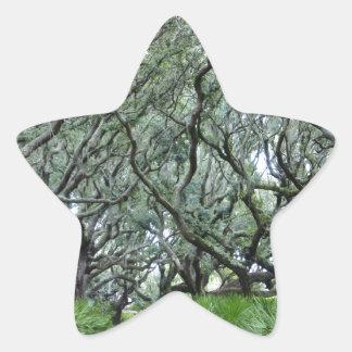 Isla del Cumberland Calcomanias Forma De Estrella