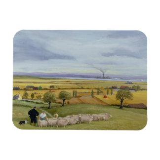 Isla del granjero de las ovejas de Sheppey Imán Foto Rectangular