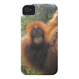 Isla del orangután de la selva tropical de Borneo Case-Mate iPhone 4 Cárcasas