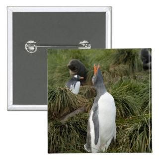 Isla del sur de Georgia, Godthul. Pingüino de Gent