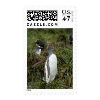 Isla del sur de Georgia, Godthul. Pingüino de Sellos Postales