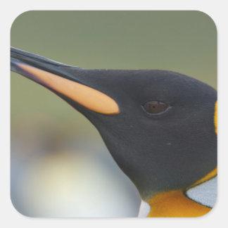 Isla del sur de Georgia, puerto del oro. Pingüino Pegatina Cuadrada