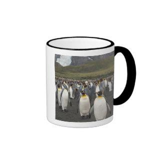 Isla del sur de Georgia, puerto del oro. Pingüino Taza A Dos Colores