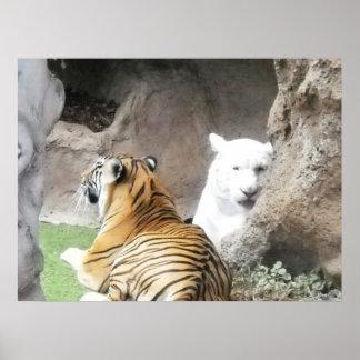 Isla España de Tenerife de los pares del tigre Poster