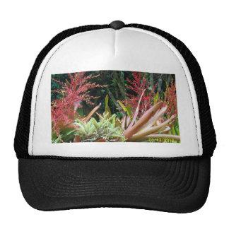 Isla grande del gorra de los jardines botánicos de