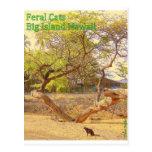 Isla grande Hawaii de los gatos salvajes Postal