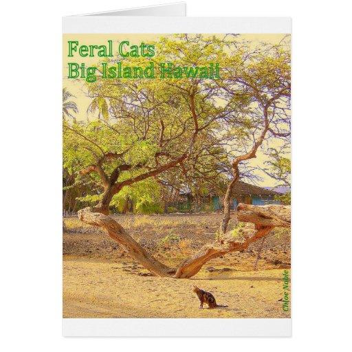 Isla grande Hawaii de los gatos salvajes Tarjetas
