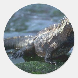 Isla marina de la Iguana-Fernandina, las Islas Pegatina Redonda