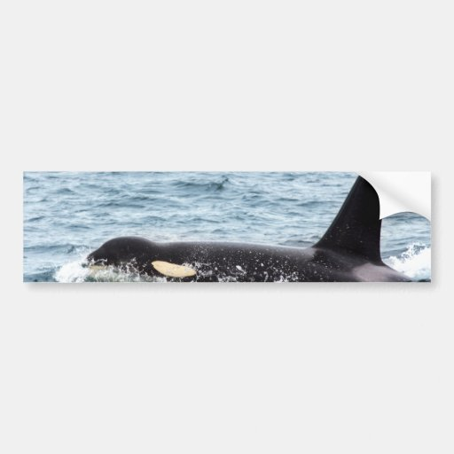 Isla masculina de San Juan de la ballena de la orc Pegatina Para Auto