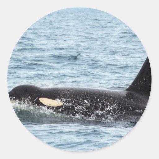 Isla masculina de San Juan de la ballena de la Pegatina Redonda