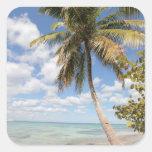 Isla Saona - palmera en la playa Colcomanias Cuadradases