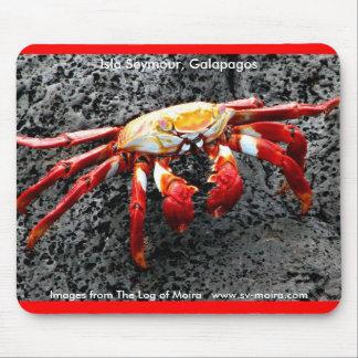 Isla Seymour, Galapagos, Red crab Mouse Pad