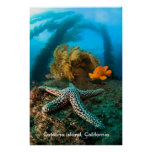Isla subacuática de Catalina, California Poster