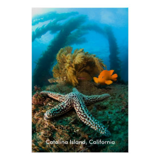 Isla subacuática de Catalina, California Póster