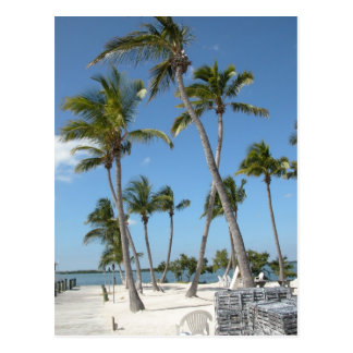Islamorada Florida Beach Postcard