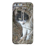 Island Cat at St. John Barely There iPhone 6 Case