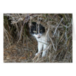 Island Cat at St. John Card