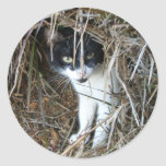 Island Cat at St. John Classic Round Sticker