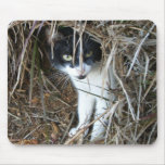 Island Cat at St. John Mouse Pad