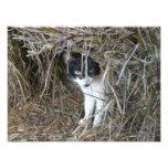 Island Cat at St. John Photo Print