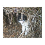 Island Cat Gallery Wrapped Canvas