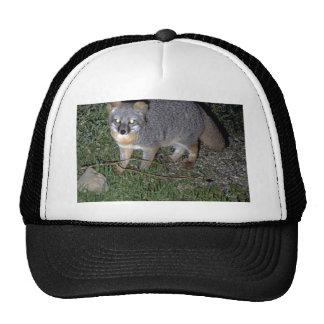 Island Fox Trucker Hat