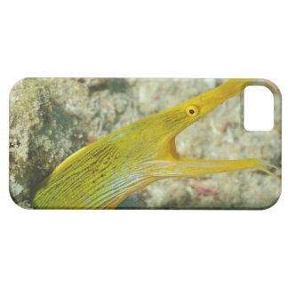Island of Borneo, Sipadan Island iPhone SE/5/5s Case