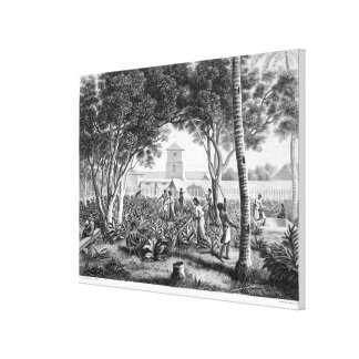 Island of Guam: Natives at Work in the Garden of t Canvas Print