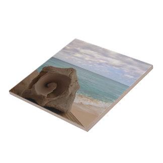 Island Seashell on the Beach Nature Photography Tile