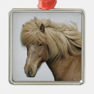 Islandia. Retrato de un caballo islandés Adorno Navideño Cuadrado De Metal
