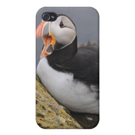 Islandic Puffin iPhone 4 Covers