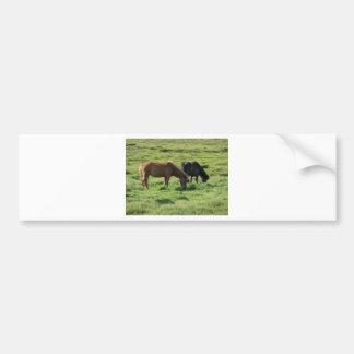 Islandpferde Car Bumper Sticker