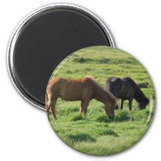 Islandpferde Magnet