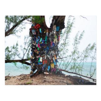 Islas Caimán: árbol del zapato en el borde del océ Postal