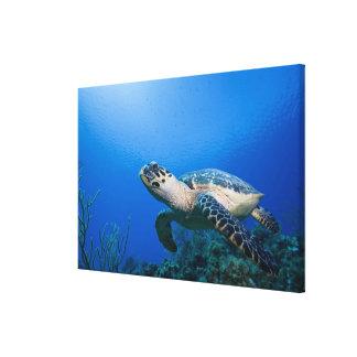 Islas Caimán, pequeñas Islas Caimán, 2 subacuático Lienzo Envuelto Para Galerias