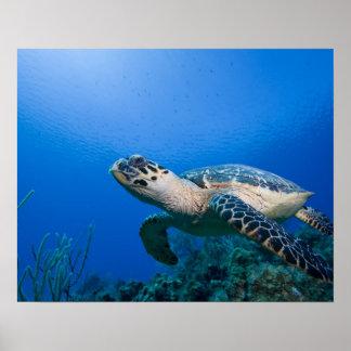 Islas Caimán, pequeñas Islas Caimán, 2 subacuático Poster