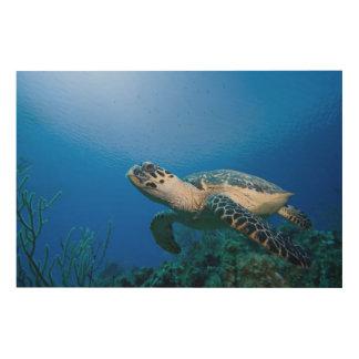 Islas Caimán, pequeñas Islas Caimán, 2 subacuático Cuadros De Madera