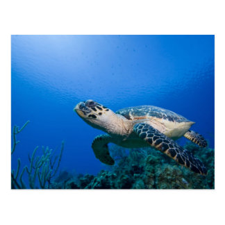 Islas Caimán, pequeñas Islas Caimán, 2 Tarjetas Postales