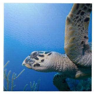 Islas Caimán, pequeñas Islas Caimán, subacuáticas Azulejo Cuadrado Grande