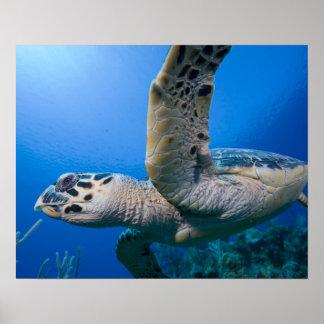 Islas Caimán, pequeñas Islas Caimán, subacuáticas Poster