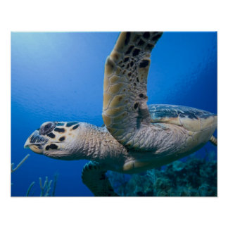 Islas Caimán, pequeñas Islas Caimán, subacuáticas Póster
