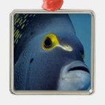 Islas Caimán, Pomacanthus francés del Angelfish Ornamentos Para Reyes Magos