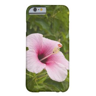 Islas de cocinero Atiu Flor del hibisco
