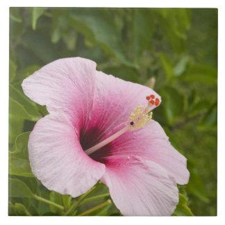 Islas de cocinero, Atiu. Flor del hibisco Azulejo Cuadrado Grande