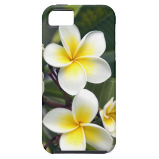 Islas de cocinero de la flor del Frangipani iPhone 5 Protectores