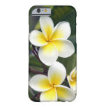 Islas de cocinero de la flor del Frangipani Funda De iPhone 6 Barely There