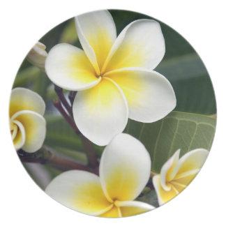 Islas de cocinero de la flor del Frangipani Plato Para Fiesta