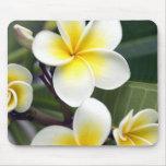 Islas de cocinero de la flor del Frangipani Tapetes De Raton