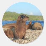 Islas de las Islas Galápagos adorables del león Etiquetas Redondas
