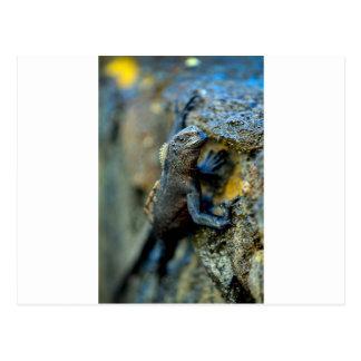 Islas de las Islas Galápagos de la iguana marina d